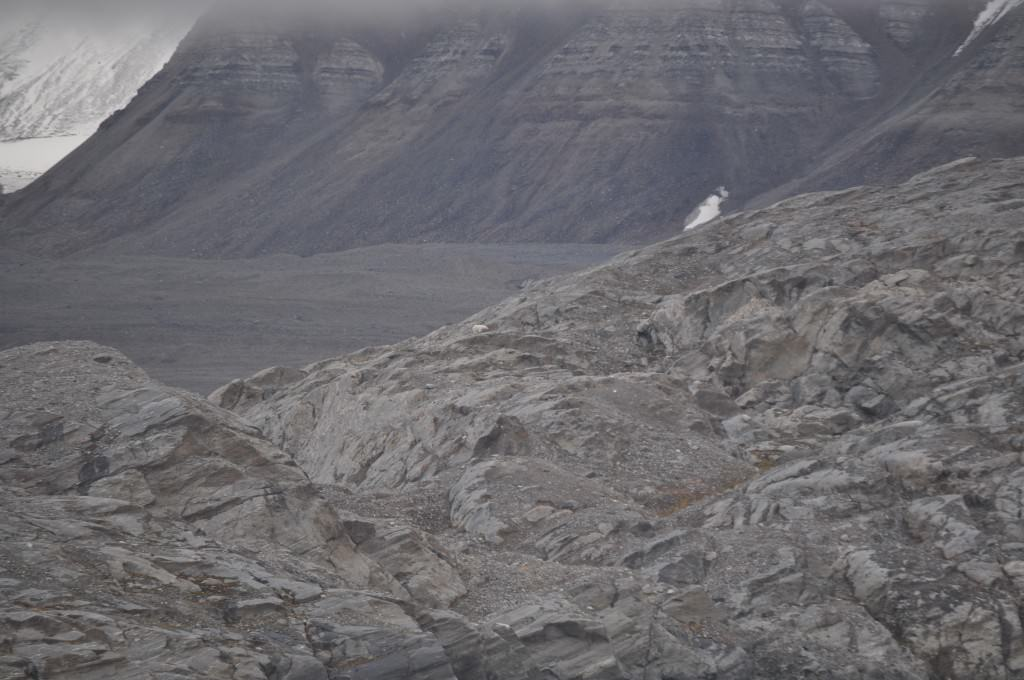 Svalbard 2015 (257)