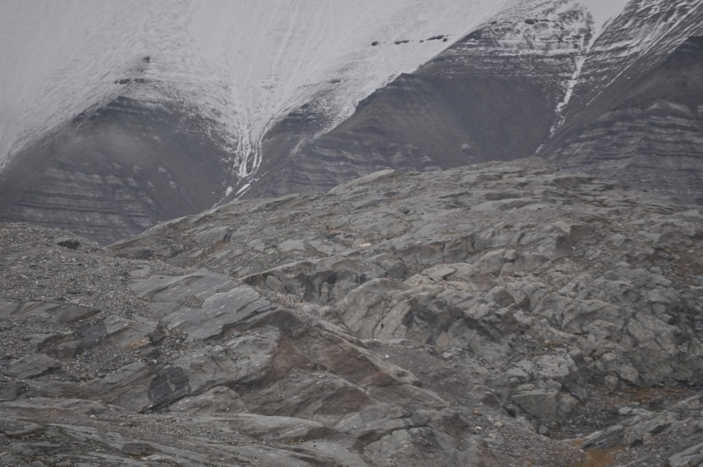 Svalbard 2015 (270)