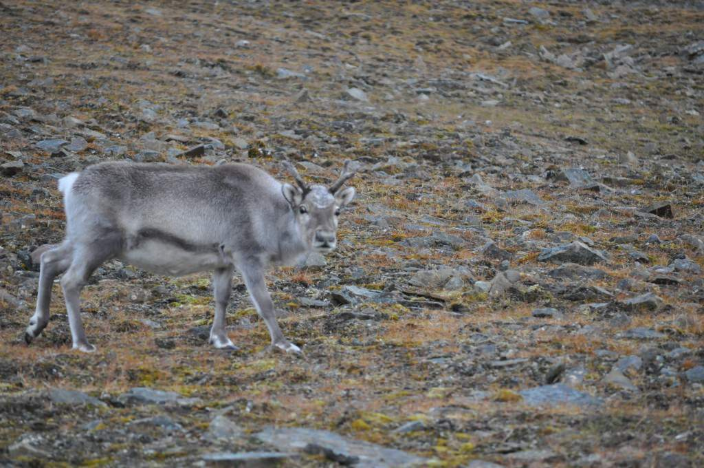 Svalbard 2015 (516)
